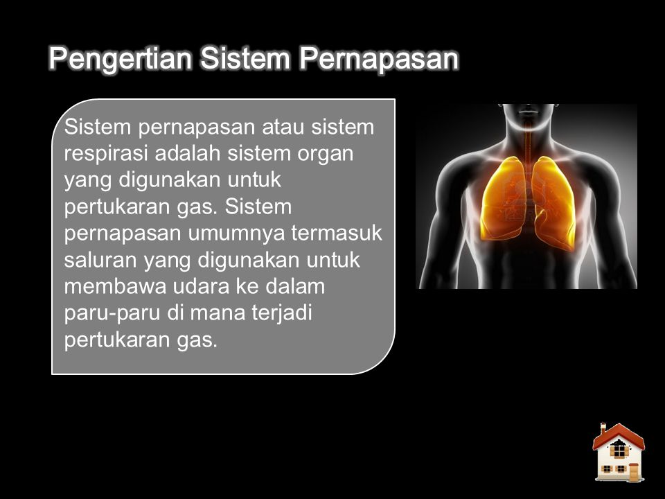 Sistem pernapasan atau sistem respirasi adalah sistem organ yang digunakan untuk pertukaran gas.