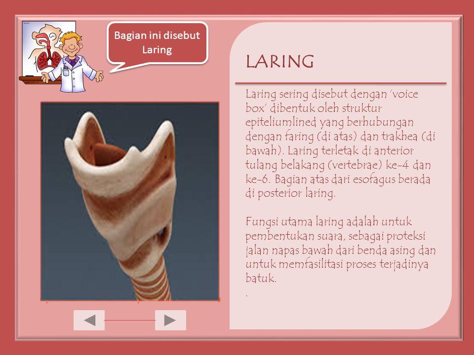 LARING Laring sering disebut dengan 'voice box' dibentuk oleh struktur epiteliumlined yang berhubungan dengan faring (di atas) dan trakhea (di bawah).