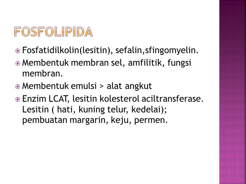  Fosfatidilkolin(lesitin), sefalin,sfingomyelin.  Membentuk membran sel, amfilitik, fungsi membran.  Membentuk emulsi > alat angkut  Enzim LCAT, l