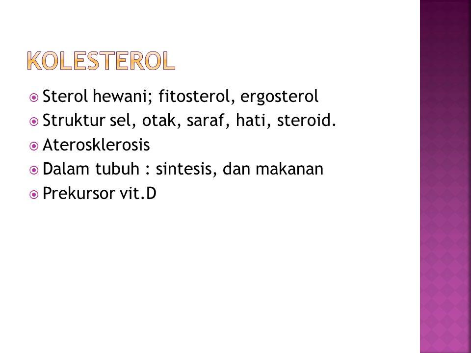  Sterol hewani; fitosterol, ergosterol  Struktur sel, otak, saraf, hati, steroid.  Aterosklerosis  Dalam tubuh : sintesis, dan makanan  Prekursor