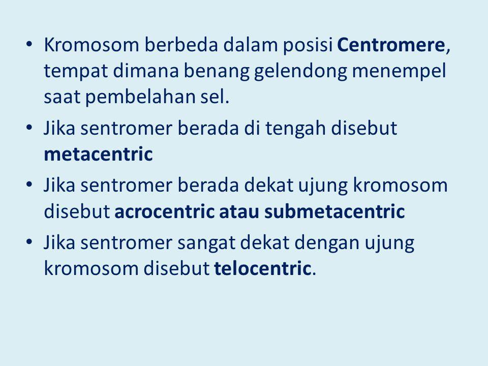 Kromosom berbeda dalam posisi Centromere, tempat dimana benang gelendong menempel saat pembelahan sel. Jika sentromer berada di tengah disebut metacen