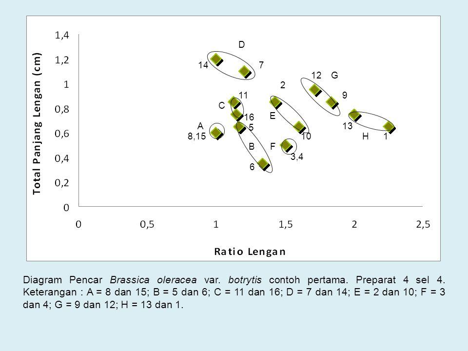 Diagram Pencar Brassica oleracea var. botrytis contoh pertama. Preparat 4 sel 4. Keterangan : A = 8 dan 15; B = 5 dan 6; C = 11 dan 16; D = 7 dan 14;
