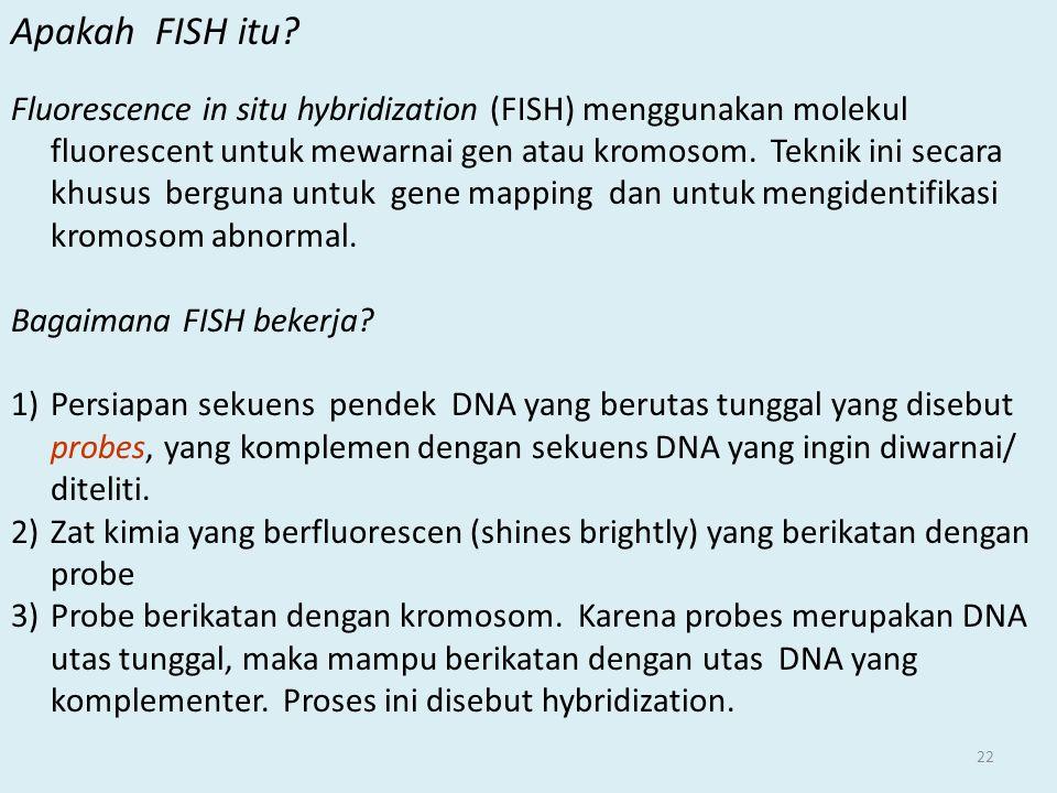 22 Apakah FISH itu? Fluorescence in situ hybridization (FISH) menggunakan molekul fluorescent untuk mewarnai gen atau kromosom. Teknik ini secara khus