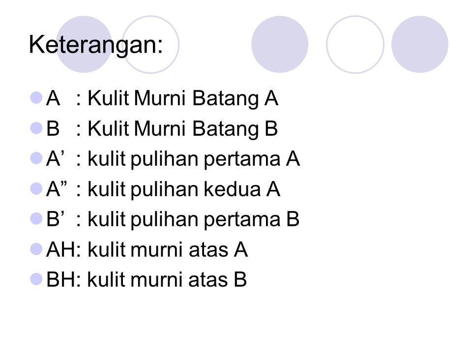 Keterangan: A: Kulit Murni Batang A B: Kulit Murni Batang B A': kulit pulihan pertama A A : kulit pulihan kedua A B': kulit pulihan pertama B AH: kulit murni atas A BH: kulit murni atas B