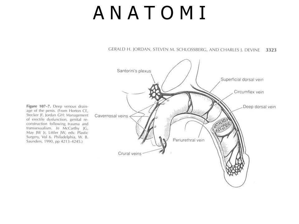 PEMBAGIAN & ETIOLOGI Kongenital, kelainan pada pertemuan urethra membranacea dg bulbus urethra Akuisita, kelainan disebabkan infeksi dan trauma dimana lapisan uroepitelial hilang.