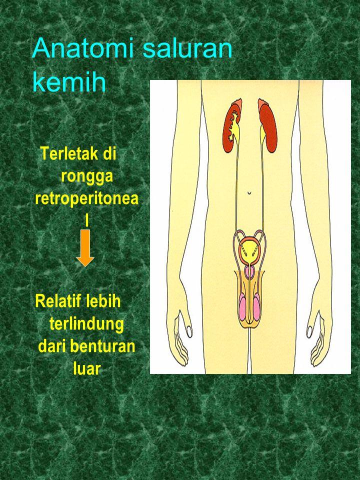 Anatomi saluran kemih Terletak di rongga retroperitonea l Relatif lebih terlindung dari benturan luar
