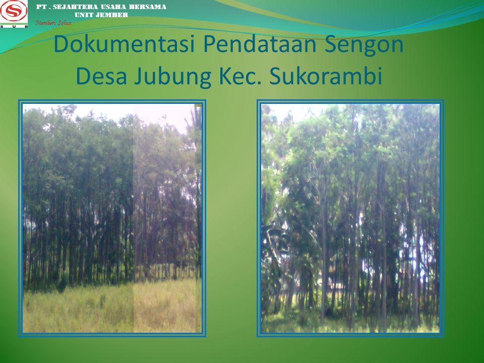 Dokumentasi hasil Survey lapangan pembagian bibit sengon di Desa Bangsalsari. PT. SEJAHTERA USAHA BERSAMA UNIT JEMBER Memberi Solusi