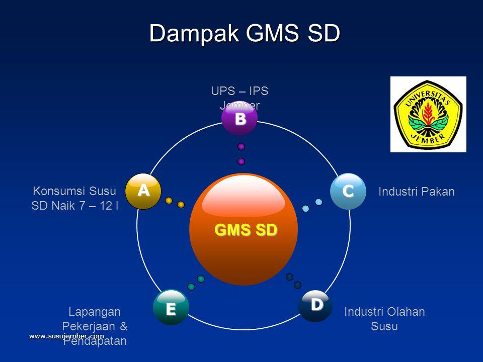 www.susujember.com Dampak GMS SD Dampak GMS SD GMS SD B E C D A Konsumsi Susu SD Naik 7 – 12 l UPS – IPS Jember Industri Pakan Lapangan Pekerjaan & Pe
