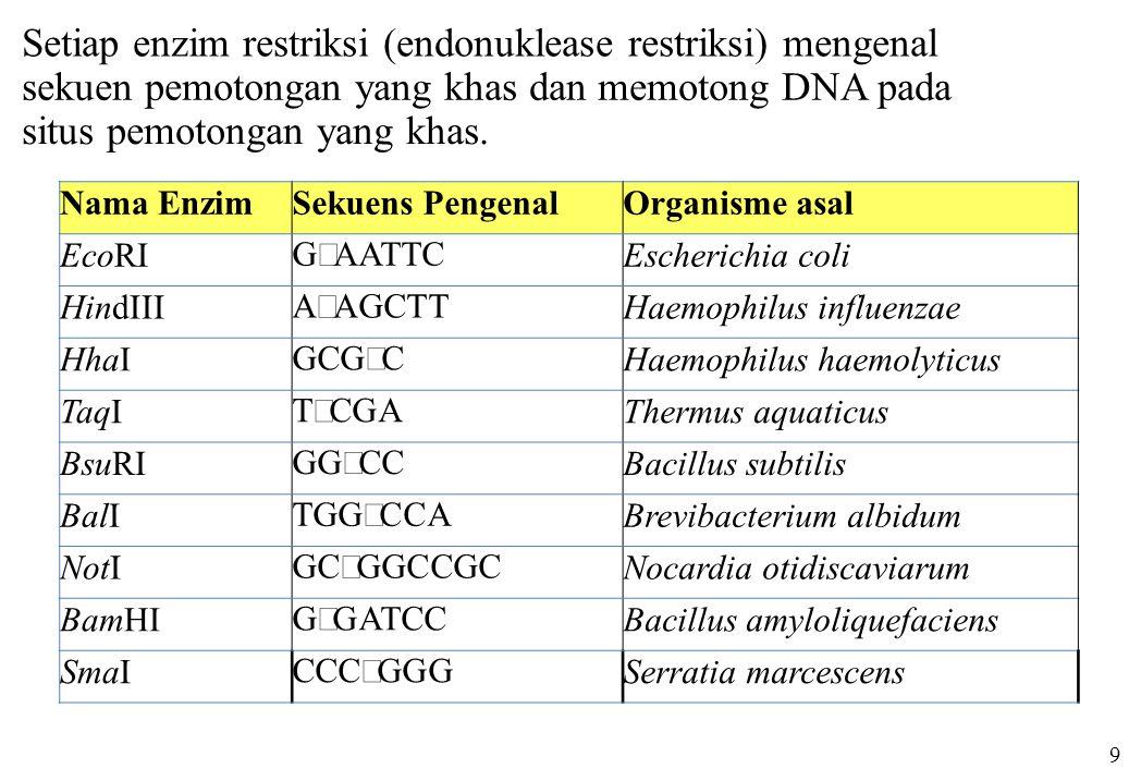 Nama EnzimSekuens PengenalOrganisme asal EcoRI G ↓ AATTC Escherichia coli HindIII A ↓ AGCTT Haemophilus influenzae HhaI GCG ↓ C Haemophilus haemolytic