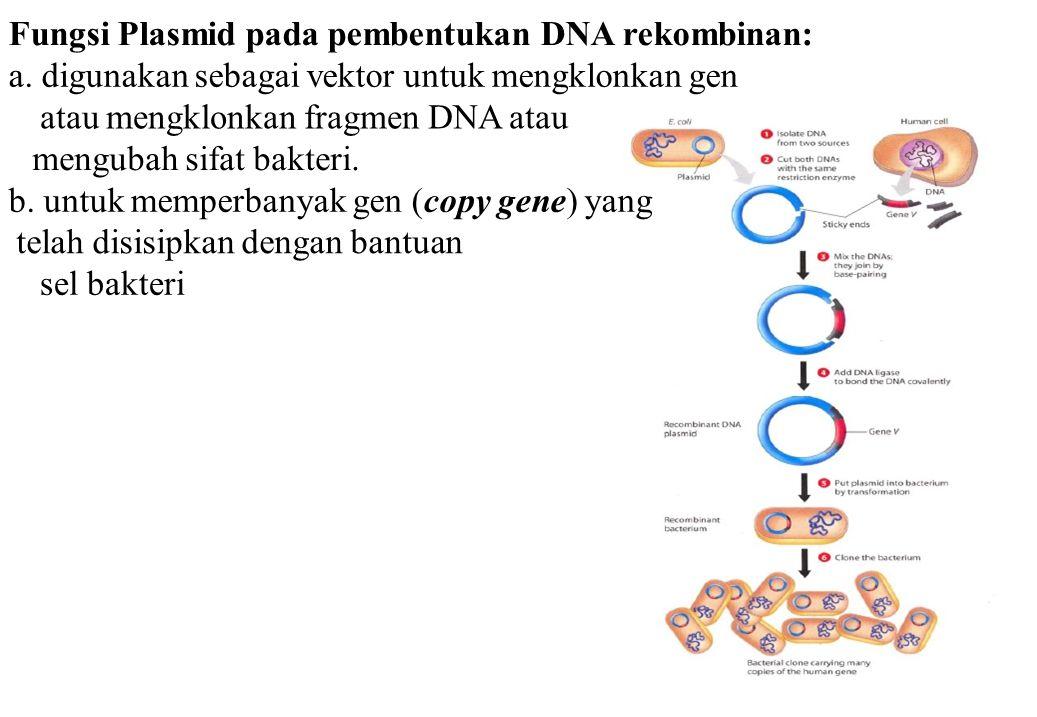 Fungsi Plasmid pada pembentukan DNA rekombinan: a. digunakan sebagai vektor untuk mengklonkan gen atau mengklonkan fragmen DNA atau mengubah sifat bak