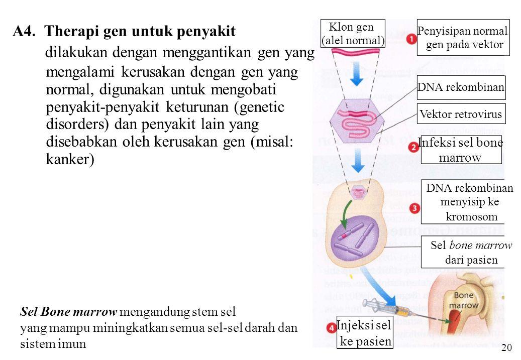 A4. Therapi gen untuk penyakit dilakukan dengan menggantikan gen yang mengalami kerusakan dengan gen yang normal, digunakan untuk mengobati penyakit-p