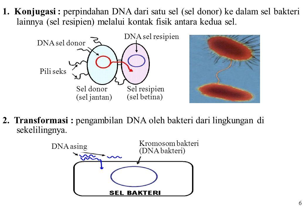 DNA sel donor Pili seks Sel donor (sel jantan) DNA sel resipien Sel resipien (sel betina) 1. Konjugasi : perpindahan DNA dari satu sel (sel donor) ke