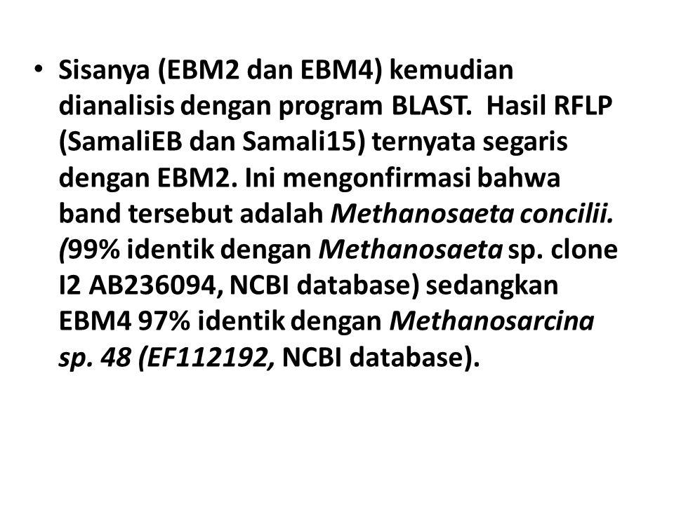 Sisanya (EBM2 dan EBM4) kemudian dianalisis dengan program BLAST. Hasil RFLP (SamaliEB dan Samali15) ternyata segaris dengan EBM2. Ini mengonfirmasi b