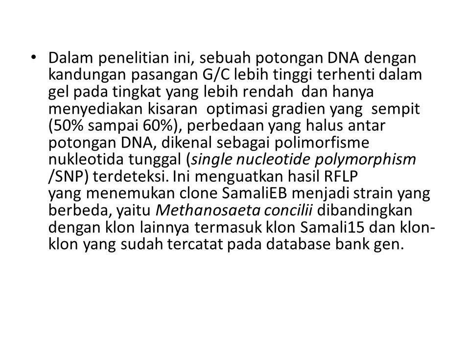 Dalam penelitian ini, sebuah potongan DNA dengan kandungan pasangan G/C lebih tinggi terhenti dalam gel pada tingkat yang lebih rendah dan hanya menye