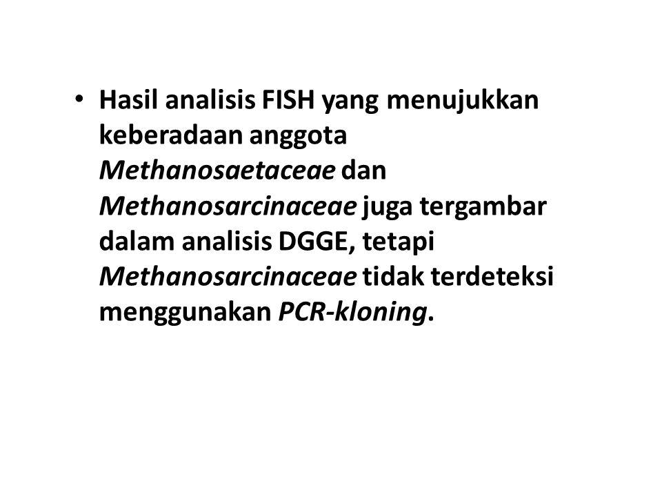 Hasil analisis FISH yang menujukkan keberadaan anggota Methanosaetaceae dan Methanosarcinaceae juga tergambar dalam analisis DGGE, tetapi Methanosarci