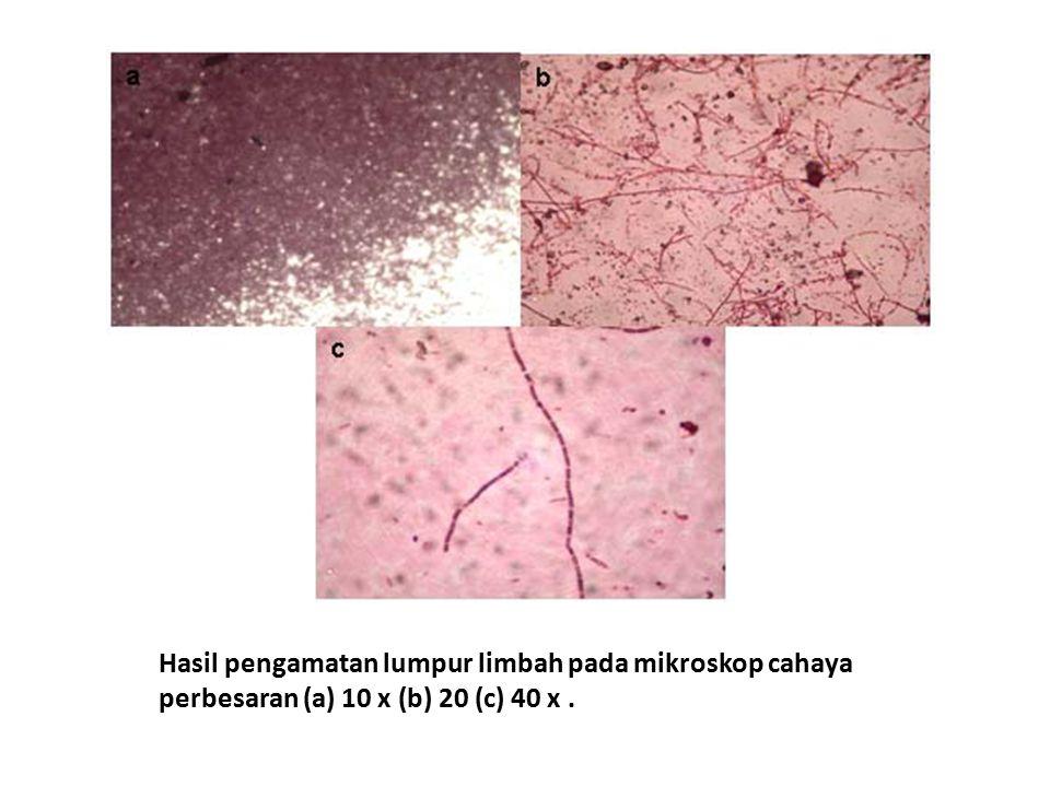 Hasil pengamatan lumpur limbah pada mikroskop cahaya perbesaran (a) 10 x (b) 20 (c) 40 x.