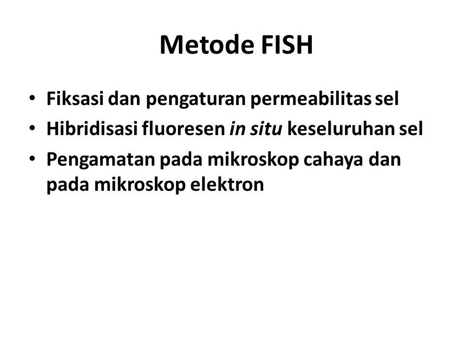 Metode FISH Fiksasi dan pengaturan permeabilitas sel Hibridisasi fluoresen in situ keseluruhan sel Pengamatan pada mikroskop cahaya dan pada mikroskop
