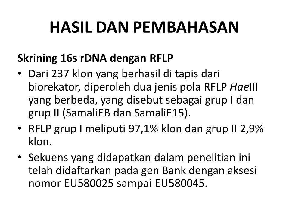HASIL DAN PEMBAHASAN Skrining 16s rDNA dengan RFLP Dari 237 klon yang berhasil di tapis dari biorekator, diperoleh dua jenis pola RFLP HaeIII yang ber