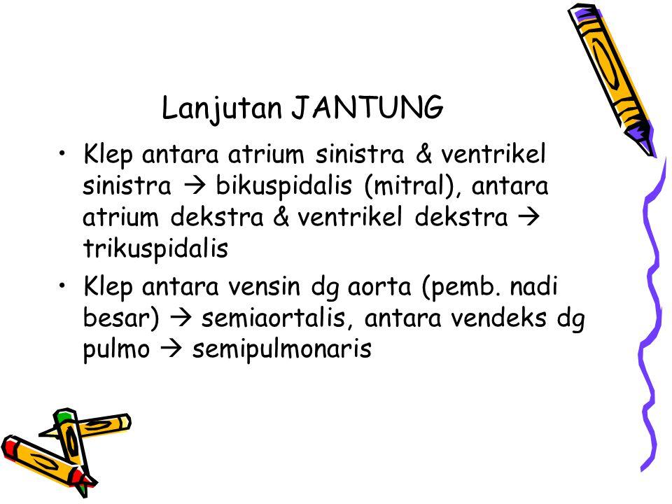 Lanjutan JANTUNG Klep antara atrium sinistra & ventrikel sinistra  bikuspidalis (mitral), antara atrium dekstra & ventrikel dekstra  trikuspidalis K