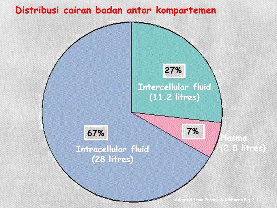 Distribusi cairan badan antar kompartemen 67% 27% 7% Intracellular fluid (28 litres)  Intercellular fluid (11.2 litres)  Plasma (2.8 litres)  Adapted from Pocock & Richards Fig 2.1