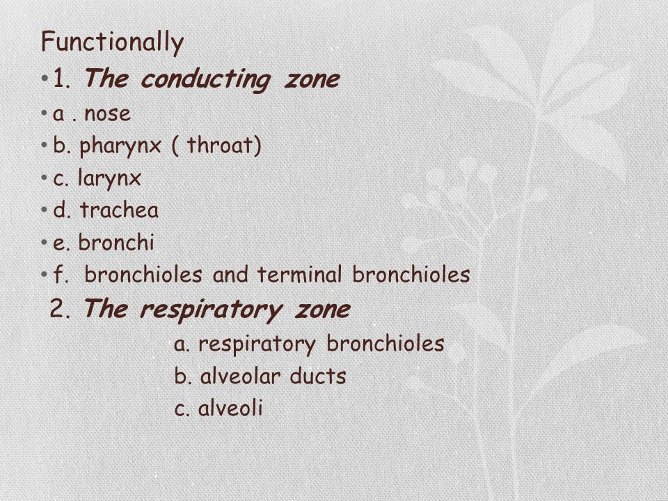 Functionally 1. The conducting zone a. nose b. pharynx ( throat) c. larynx d. trachea e. bronchi f. bronchioles and terminal bronchioles 2. The respir