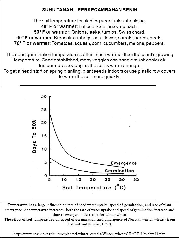SUHU TANAH – PERKECAMBAHAN BENIH The soil temperature for planting vegetables should be: 40° F or warmer: Lettuce, kale, peas, spinach. 50° F or warme