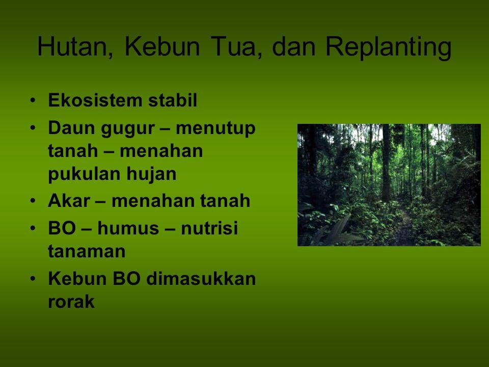 Hutan, Kebun Tua, dan Replanting Ekosistem stabil Daun gugur – menutup tanah – menahan pukulan hujan Akar – menahan tanah BO – humus – nutrisi tanaman
