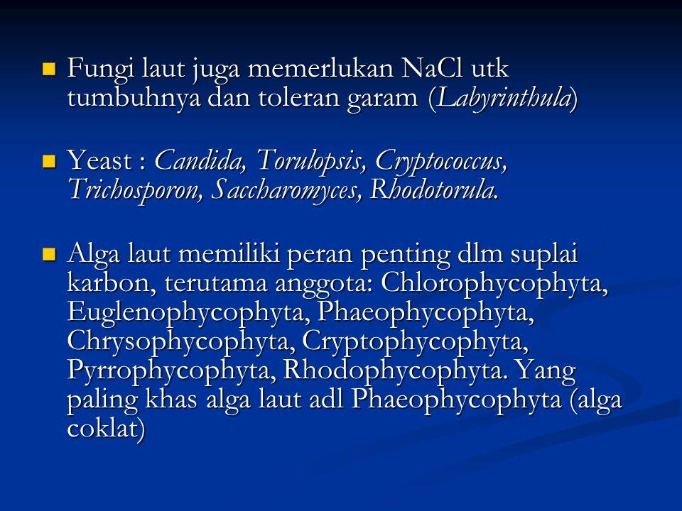 Fungi laut juga memerlukan NaCl utk tumbuhnya dan toleran garam (Labyrinthula) Fungi laut juga memerlukan NaCl utk tumbuhnya dan toleran garam (Labyrinthula) Yeast : Candida, Torulopsis, Cryptococcus, Trichosporon, Saccharomyces, Rhodotorula.