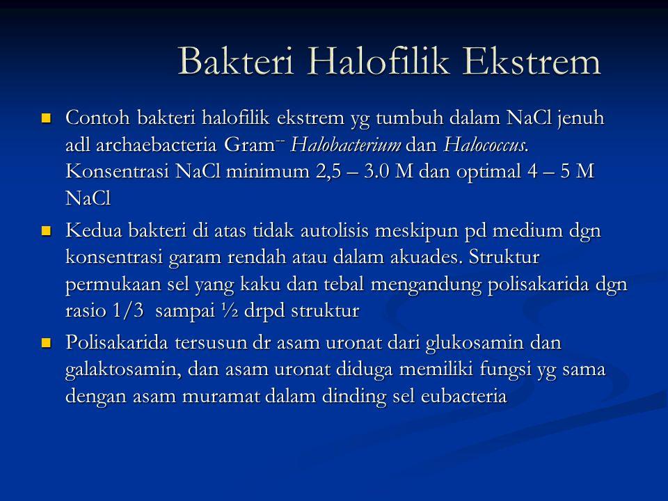 Contoh bakteri halofilik ekstrem yg tumbuh dalam NaCl jenuh adl archaebacteria Gram -- Halobacterium dan Halococcus. Konsentrasi NaCl minimum 2,5 – 3.