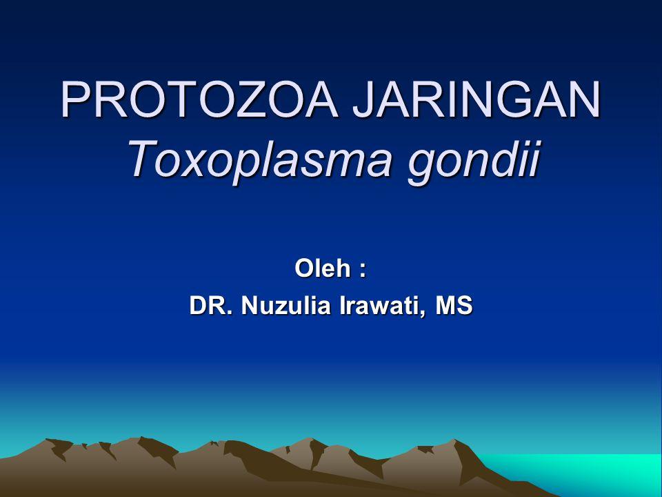 PROTOZOA JARINGAN Toxoplasma gondii Oleh : DR. Nuzulia Irawati, MS