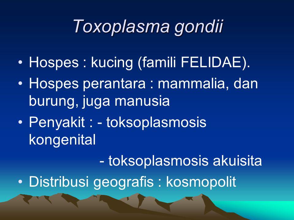 Toxoplasma gondii Hospes : kucing (famili FELIDAE). Hospes perantara : mammalia, dan burung, juga manusia Penyakit : - toksoplasmosis kongenital - tok