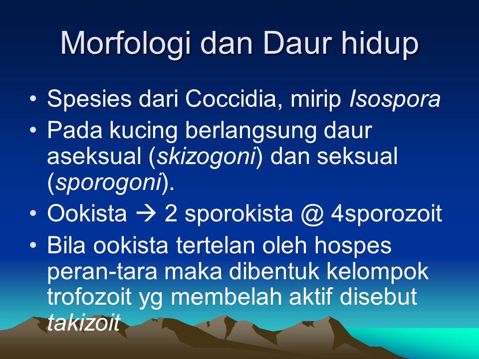 Morfologi dan Daur hidup Spesies dari Coccidia, mirip Isospora Pada kucing berlangsung daur aseksual (skizogoni) dan seksual (sporogoni). Ookista  2