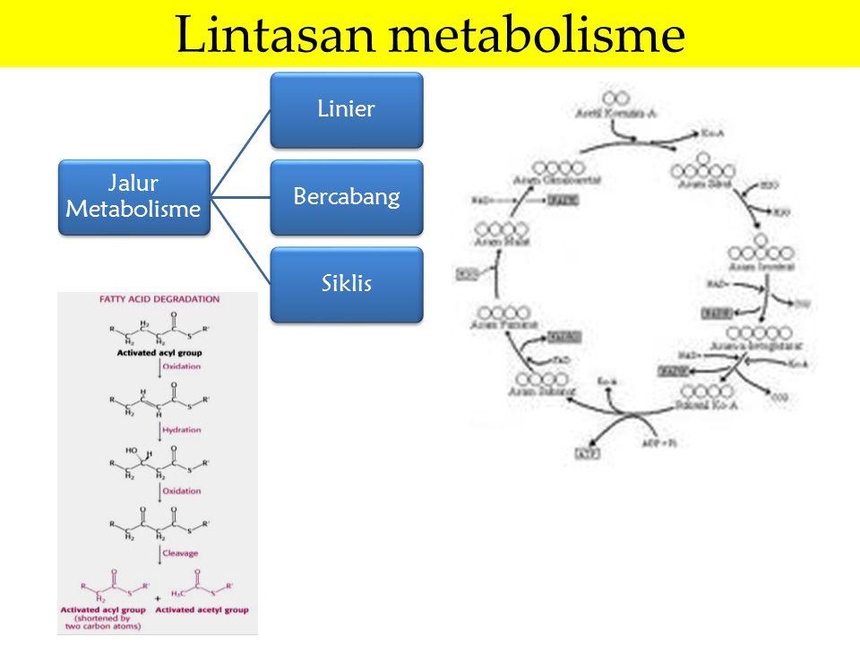 Lintasan metabolisme Jalur Metabolisme LinierBercabangSiklis