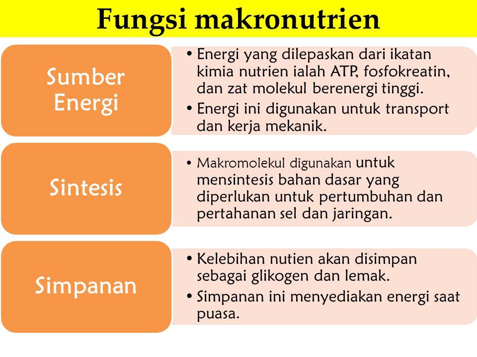 Fungsi makronutrien Energi yang dilepaskan dari ikatan kimia nutrien ialah ATP, fosfokreatin, dan zat molekul berenergi tinggi. Energi ini digunakan u