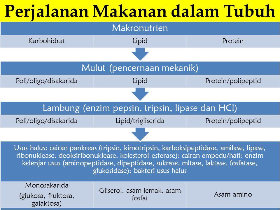 Usus halus: cairan pankreas (tripsin, kimotripsin, karboksipeptidase, amilase, lipase, ribonuklease, deoksiribonuklease, kolesterol esterase); cairan