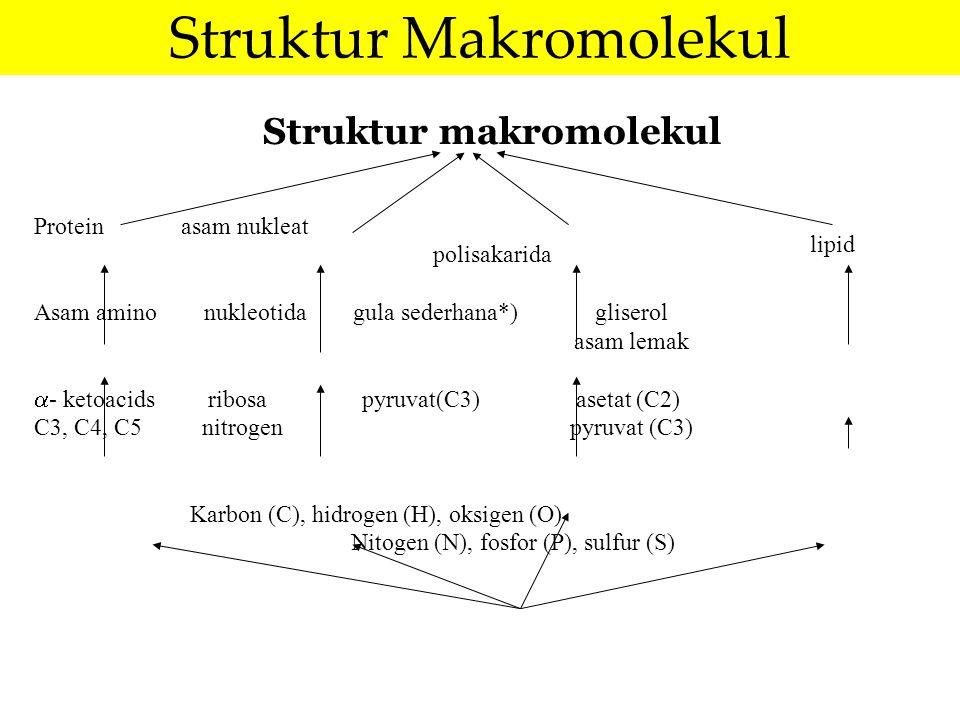 Struktur makromolekul Protein asam nukleat polisakarida Asam amino nukleotida gula sederhana*) gliserol asam lemak  - ketoacids ribosa pyruvat(C3) as