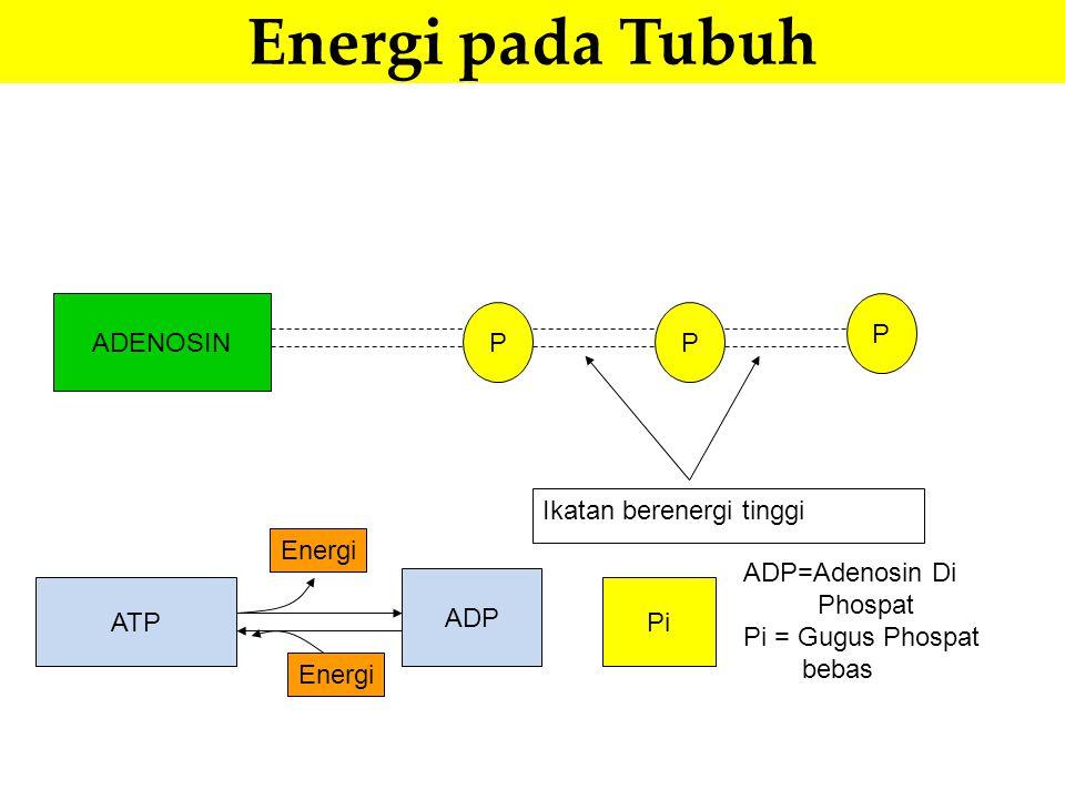 Energi pada Tubuh ADENOSIN P P P Ikatan berenergi tinggi ATP ADP Pi ADP=Adenosin Di Phospat Pi = Gugus Phospat bebas Energi