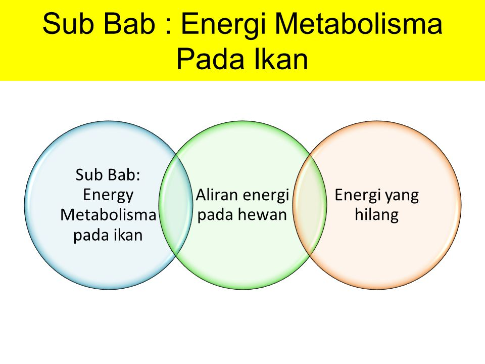 Sub Bab: Energy Metabolisma pada ikan Aliran energi pada hewan Energi yang hilang Sub Bab : Energi Metabolisma Pada Ikan