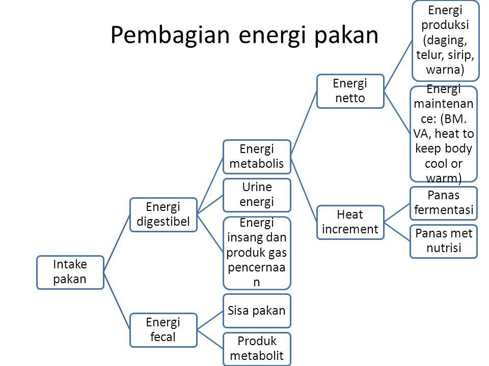 Pembagian energi pakan Intake pakan Energi digestibel Energi metabolis Energi netto Energi produksi (daging, telur, sirip, warna) Energi maintenan ce: