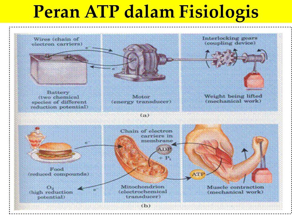 Peran ATP dalam Fisiologis