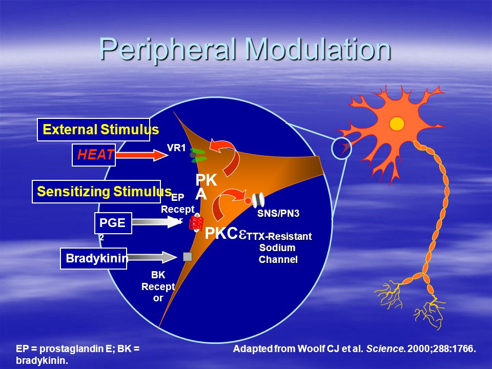 Peripheral Modulation VR1 BK Recept or HEAT External Stimulus Sensitizing Stimulus PGE 2 Bradykinin PK A PKC  EP Recept or SNS/PN3TTX-ResistantSodium
