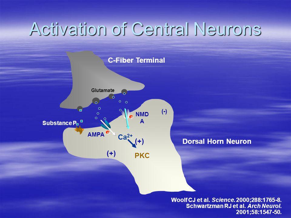Activation of Central Neurons Dorsal Horn Neuron C-Fiber Terminal AMPA NMD A Ca 2+ Glutamate PKC P P (+) (-) Woolf CJ et al. Science. 2000;288:1765-8.