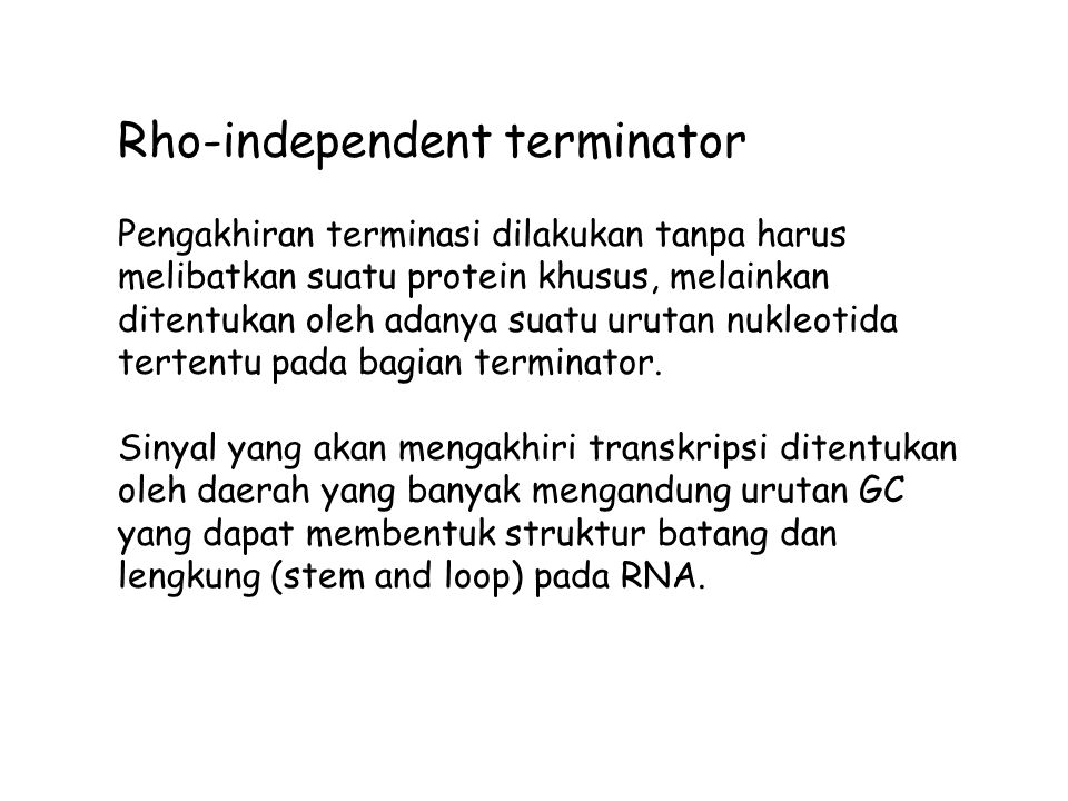 Rho-independent terminator Pengakhiran terminasi dilakukan tanpa harus melibatkan suatu protein khusus, melainkan ditentukan oleh adanya suatu urutan