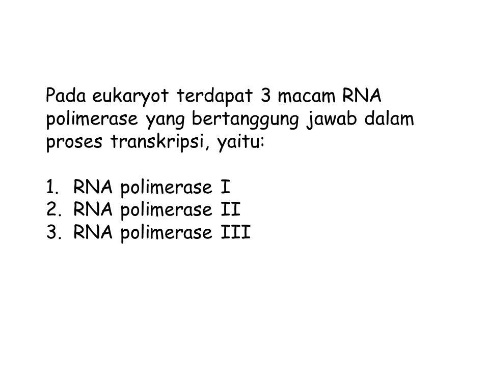 Pada eukaryot terdapat 3 macam RNA polimerase yang bertanggung jawab dalam proses transkripsi, yaitu: 1.RNA polimerase I 2.RNA polimerase II 3.RNA polimerase III