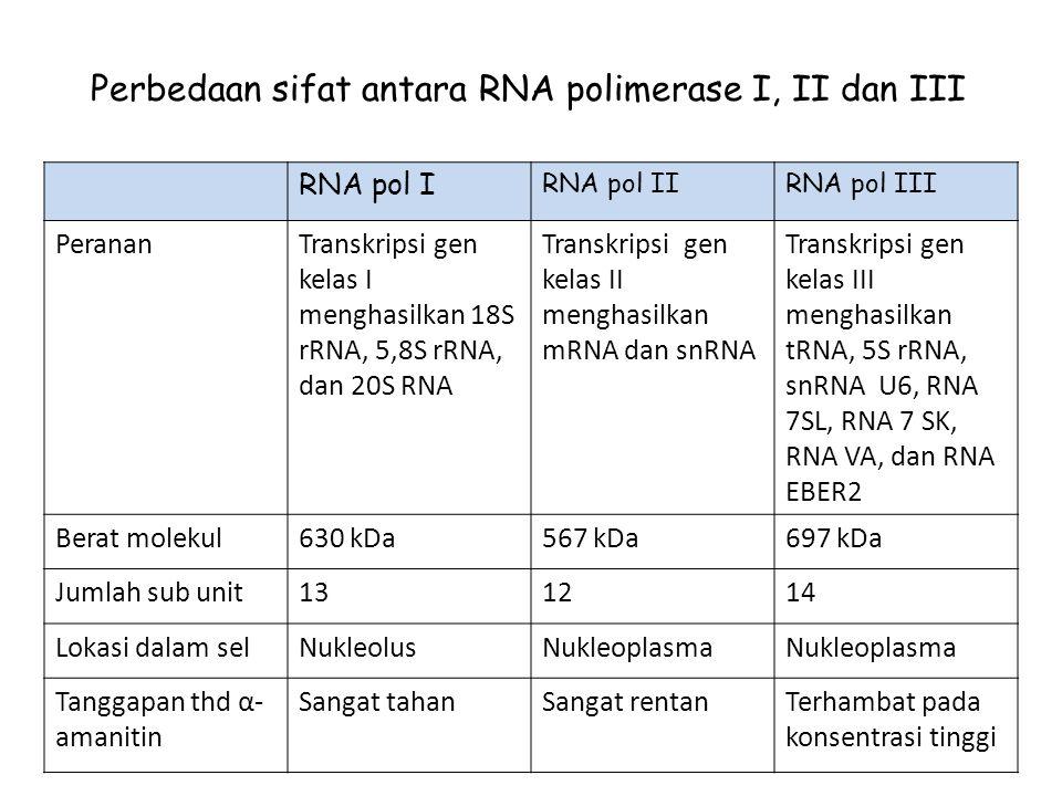 Perbedaan sifat antara RNA polimerase I, II dan III RNA pol I RNA pol IIRNA pol III PerananTranskripsi gen kelas I menghasilkan 18S rRNA, 5,8S rRNA, dan 20S RNA Transkripsi gen kelas II menghasilkan mRNA dan snRNA Transkripsi gen kelas III menghasilkan tRNA, 5S rRNA, snRNA U6, RNA 7SL, RNA 7 SK, RNA VA, dan RNA EBER2 Berat molekul630 kDa567 kDa697 kDa Jumlah sub unit131214 Lokasi dalam selNukleolusNukleoplasma Tanggapan thd α- amanitin Sangat tahanSangat rentanTerhambat pada konsentrasi tinggi