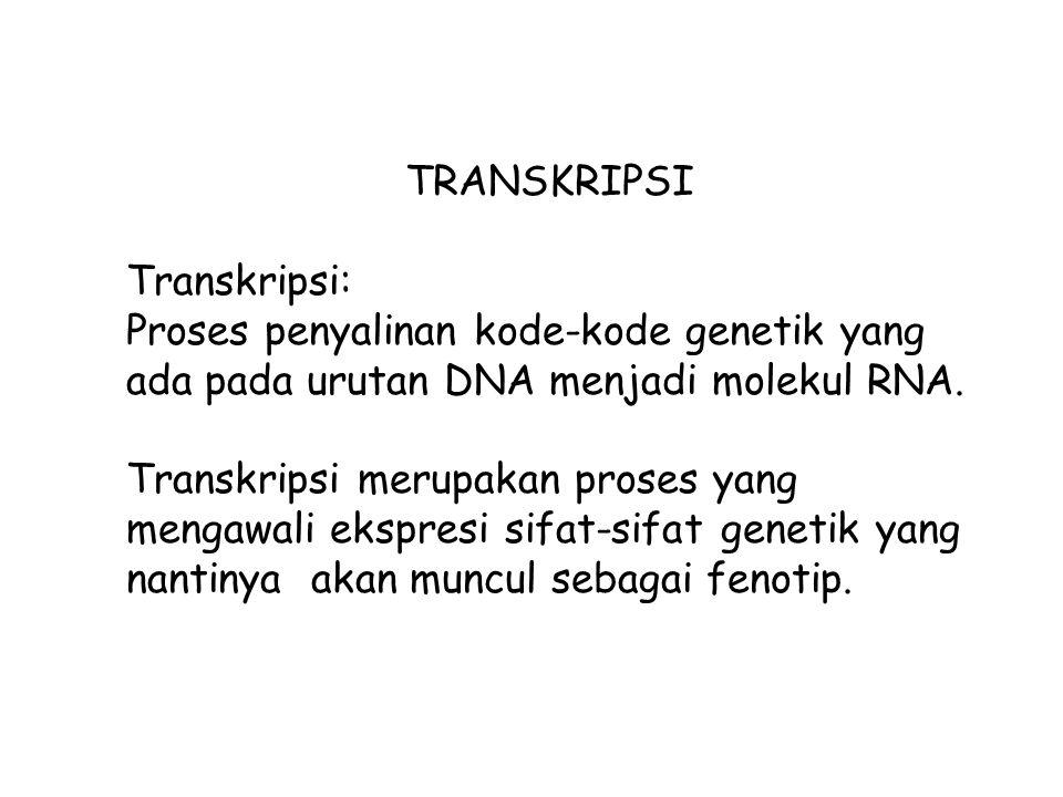 TRANSKRIPSI Transkripsi: Proses penyalinan kode-kode genetik yang ada pada urutan DNA menjadi molekul RNA. Transkripsi merupakan proses yang mengawali