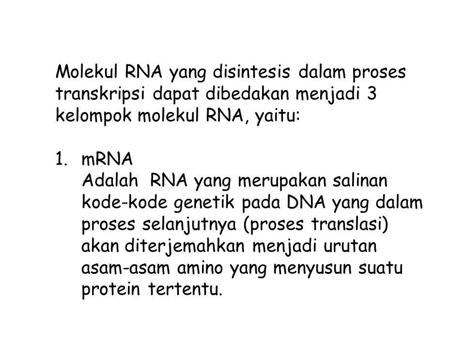 Rho-independent terminator Pengakhiran terminasi dilakukan tanpa harus melibatkan suatu protein khusus, melainkan ditentukan oleh adanya suatu urutan nukleotida tertentu pada bagian terminator.