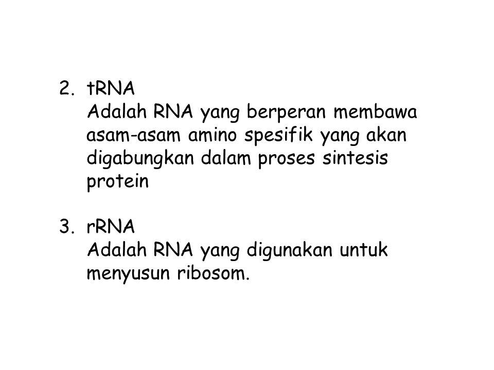 2.tRNA Adalah RNA yang berperan membawa asam-asam amino spesifik yang akan digabungkan dalam proses sintesis protein 3.rRNA Adalah RNA yang digunakan