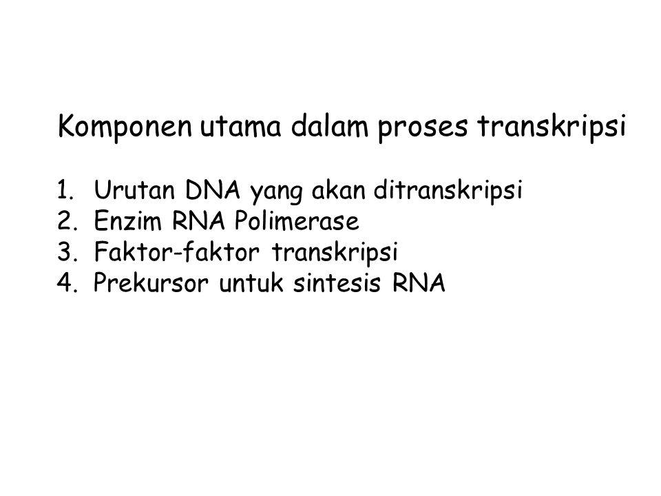 Komponen utama dalam proses transkripsi 1.Urutan DNA yang akan ditranskripsi 2.Enzim RNA Polimerase 3.Faktor-faktor transkripsi 4.Prekursor untuk sint