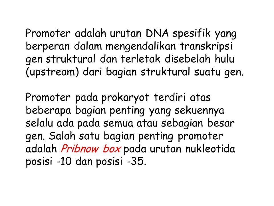 Promoter adalah urutan DNA spesifik yang berperan dalam mengendalikan transkripsi gen struktural dan terletak disebelah hulu (upstream) dari bagian st